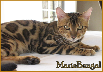mariebengal cloud