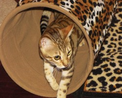 bengal et tunnel