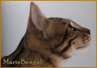 Most Wanted de marie-bengal photo de face
